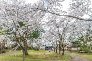 春の新庄城跡の風景の写真素材 [FYI01256013]
