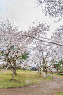 春の新庄城跡の風景の写真素材 [FYI01256014]