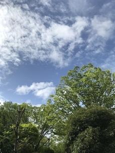 空と緑の写真素材 [FYI01256022]