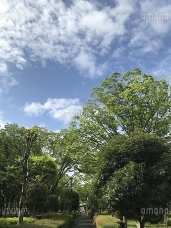 空と緑の写真素材 [FYI01256023]