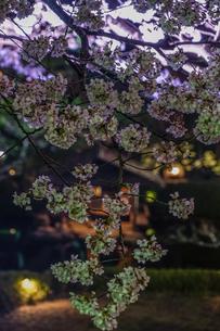 春の日本庭園のイメージの写真素材 [FYI01256026]