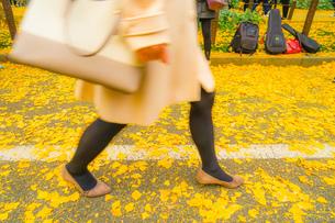 神宮外苑いちょう並木の銀杏と人々の足の写真素材 [FYI01256072]