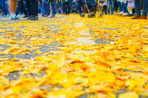 神宮外苑いちょう並木の銀杏と人々の足の写真素材 [FYI01256079]