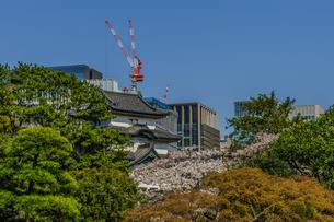 春の江戸城の富士見櫓の風景の写真素材 [FYI01256159]