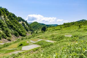 山形県 四ヶ村の棚田の写真素材 [FYI01256365]