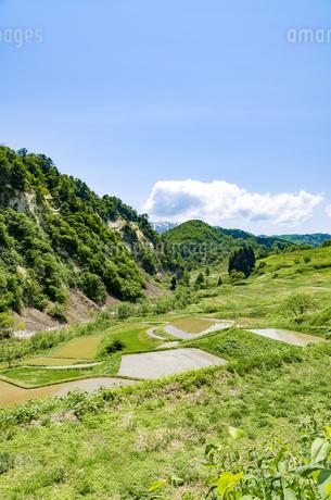 山形県 四ヶ村の棚田の写真素材 [FYI01256366]