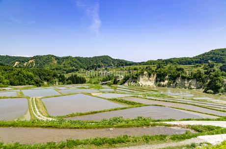 山形県 四ヶ村の棚田の写真素材 [FYI01256368]