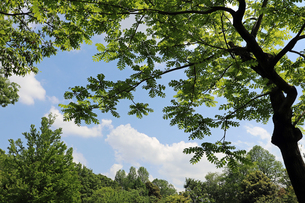 神代植物公園自然観察園の風景の写真素材 [FYI01256621]
