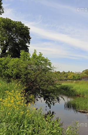 野川公園付近の野川の写真素材 [FYI01256724]