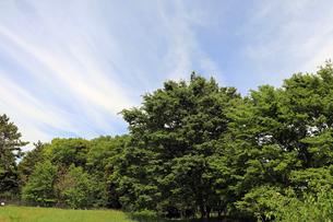 野川公園の写真素材 [FYI01256725]