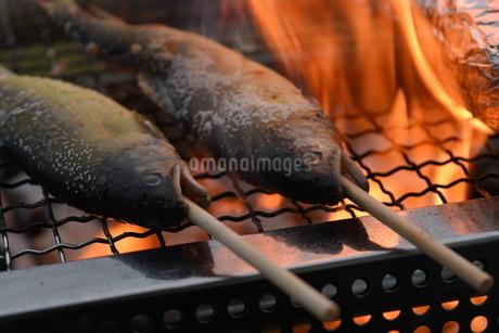 焼き魚の写真素材 [FYI01256768]