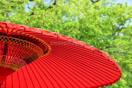 野点傘の写真素材 [FYI01256784]