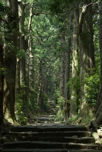 熊野古道の写真素材 [FYI01256794]