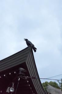 屋根に止まったカラスの写真素材 [FYI01256818]
