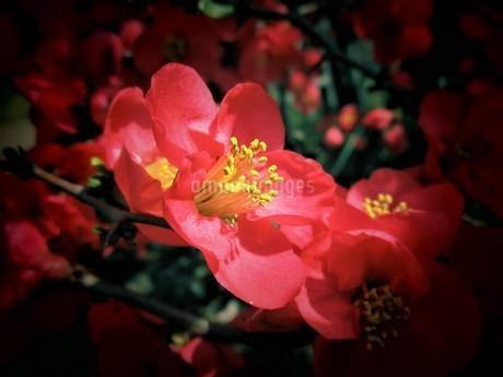 3月の花の写真素材 [FYI01256843]