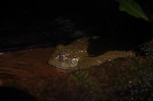 カエル2の写真素材 [FYI01257059]