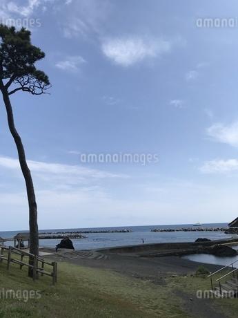 海岸と木の写真素材 [FYI01257111]