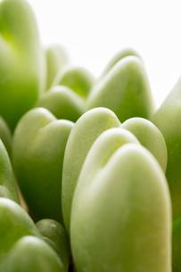 ハート形の葉のついた植物の写真素材 [FYI01257248]