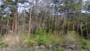 樹海2の写真素材 [FYI01257362]