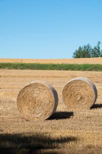 収穫後の麦畑と麦ロール 美瑛町の写真素材 [FYI01257378]
