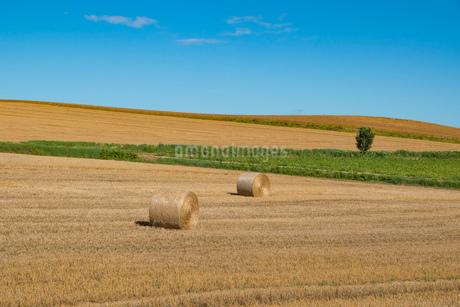 収穫後の麦畑と麦ロール 美瑛町の写真素材 [FYI01257379]