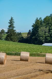 収穫後の麦畑と麦ロール 美瑛町の写真素材 [FYI01257380]