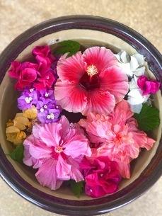 水面に浮かぶ鮮やかな花の写真素材 [FYI01257387]
