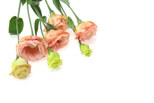 トルコキキョウの花束の写真素材 [FYI01257414]