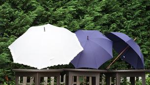 庭に干された傘の写真素材 [FYI01257484]
