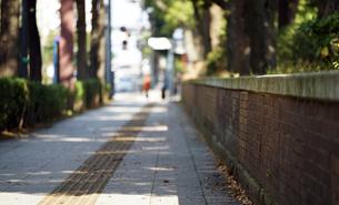 公園の歩道の写真素材 [FYI01257497]