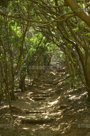 糸島芥屋の大門公園トトロの森03の写真素材 [FYI01257527]