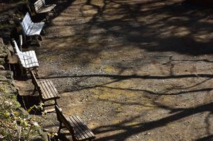 公園のベンチの写真素材 [FYI01257528]