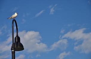青空と街灯に休む鳥の写真素材 [FYI01257534]