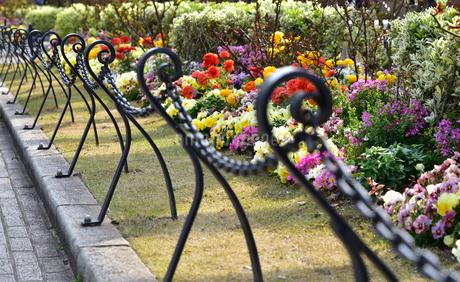 公園の花壇の写真素材 [FYI01257566]