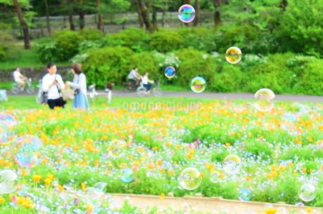 花畑とシャボン玉の写真素材 [FYI01257584]