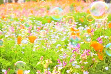 花畑とシャボン玉の写真素材 [FYI01257587]