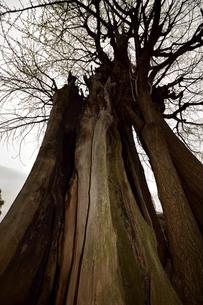 大木の写真素材 [FYI01257598]