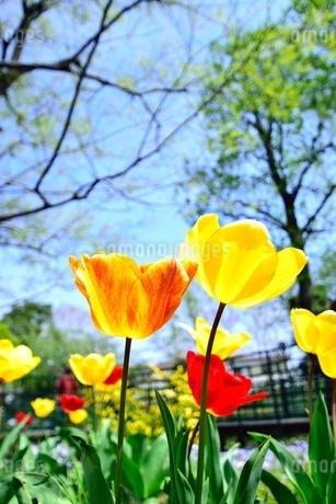 花と木の写真素材 [FYI01257616]