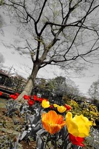 花と木の写真素材 [FYI01257623]