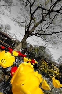 花と木の写真素材 [FYI01257625]