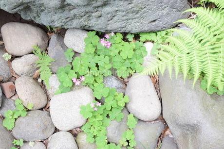 石と花と緑 の写真素材 [FYI01257629]