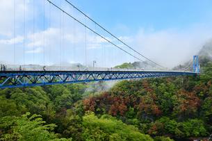 雨上がりの竜神大吊橋の写真素材 [FYI01257667]