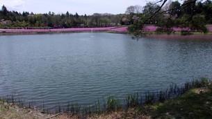 芝桜と竜神池の写真素材 [FYI01257688]