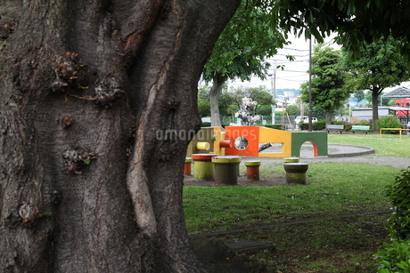 木のある公園の写真素材 [FYI01257743]