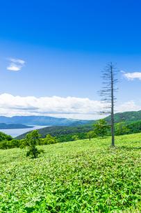 爽快 北海道 藻琴山展望台の写真素材 [FYI01258031]