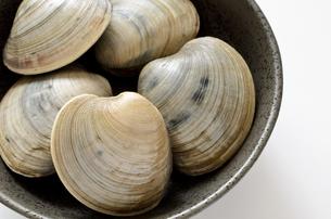 ホンビノス貝の写真素材 [FYI01258038]