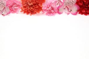 アルストロメリアとカーネーショの写真素材 [FYI01258280]
