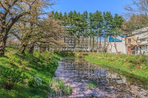 春の盛岡城の水堀の風景の写真素材 [FYI01258372]