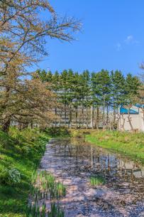 春の盛岡城の水堀の風景の写真素材 [FYI01258373]