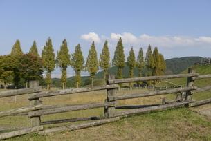牧場並木の写真素材 [FYI01258423]